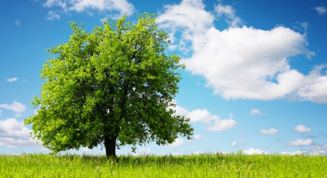 nuovo-albero-per-ogni-bimbo-nato.-Così-si-contrasta-il-consumo-di-suolo-in-nome-di-salute-e-benessere1-640x349