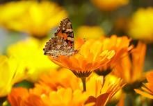butterfly-196745_640