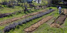 foto giardino degli aromi